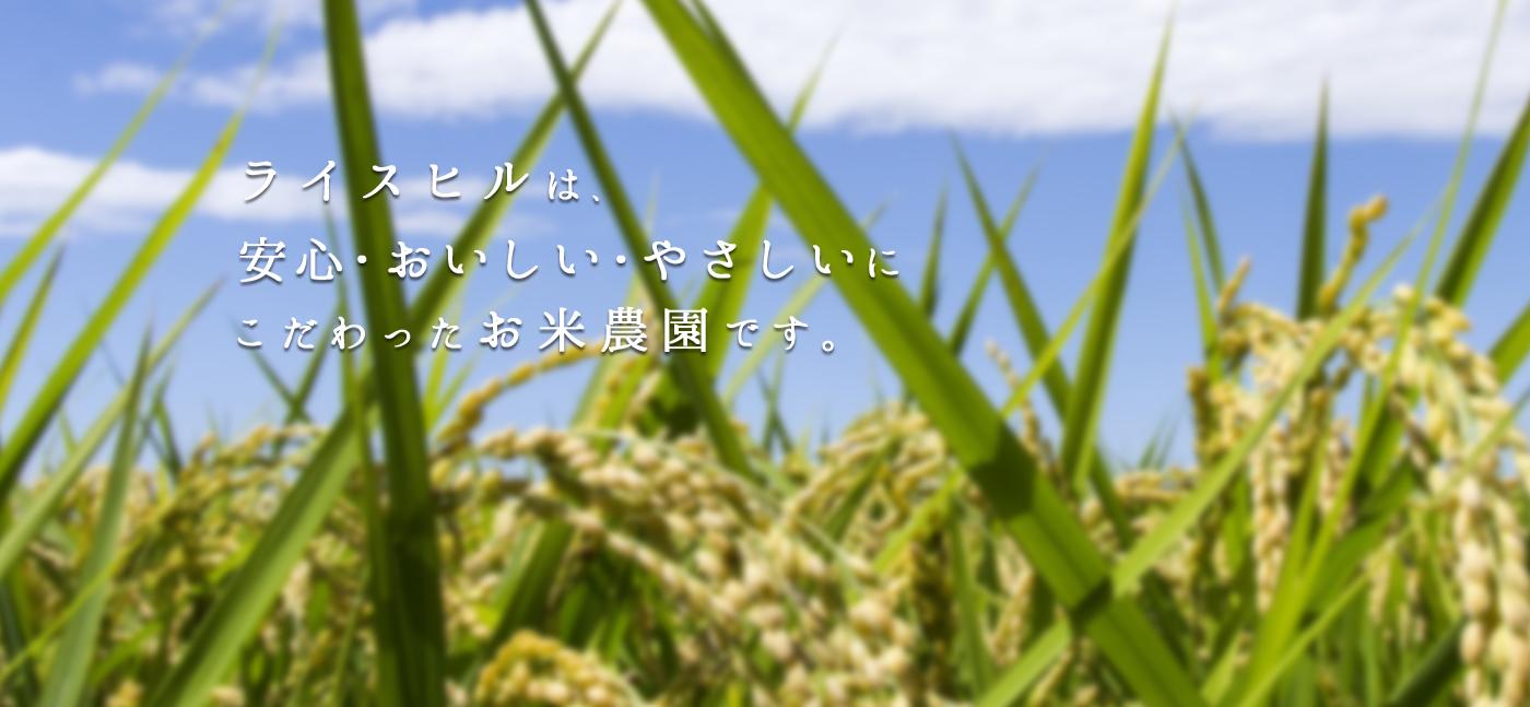 ライスヒルは、安心・美味しい・やさしいにこだわったお米農園です。